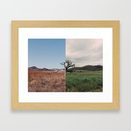 Same Tree, Different Season Framed Art Print