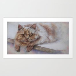 Cattitude - Long Haired Cat Staring at You Art Print