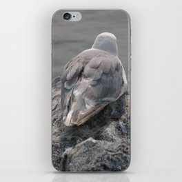 Gull at Whiterock Beach iPhone Skin