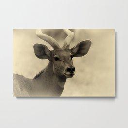Nyala Metal Print