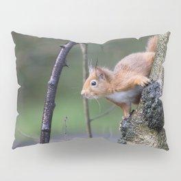 Red Squirrel 2 Pillow Sham
