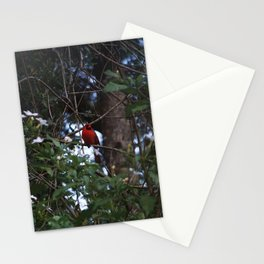 Cardinal Through the Leaves Stationery Cards