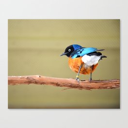BIRD TUFT Canvas Print