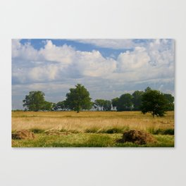Landscape with a mowed grass Canvas Print