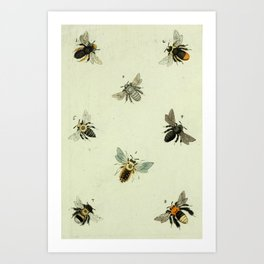 Bee Species Art Print