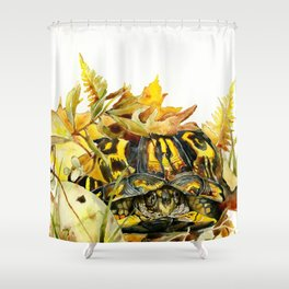Eastern Box Turtle Shower Curtain
