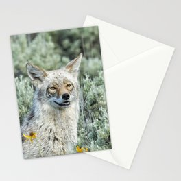Showing off My Pearly Whites - Yellowstone Coyote Stationery Cards
