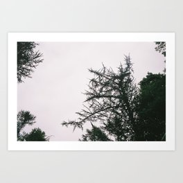 P_06 Art Print
