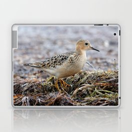 Profile of a Buff-Breasted Sandpiper Laptop & iPad Skin