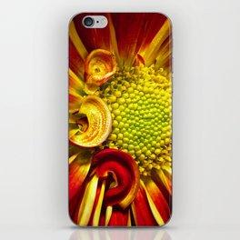 Gerbera Daisy 3 iPhone Skin