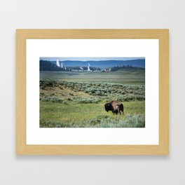 A Bull Bison Heads Towards Thermal Activity in the Hayden Valley of Yellowstone National Park Framed Art Print