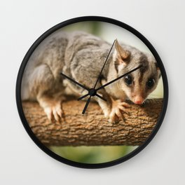 Squirrel Glider Wall Clock