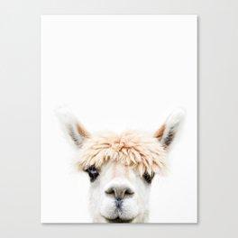 Alpaca Bangs Canvas Print