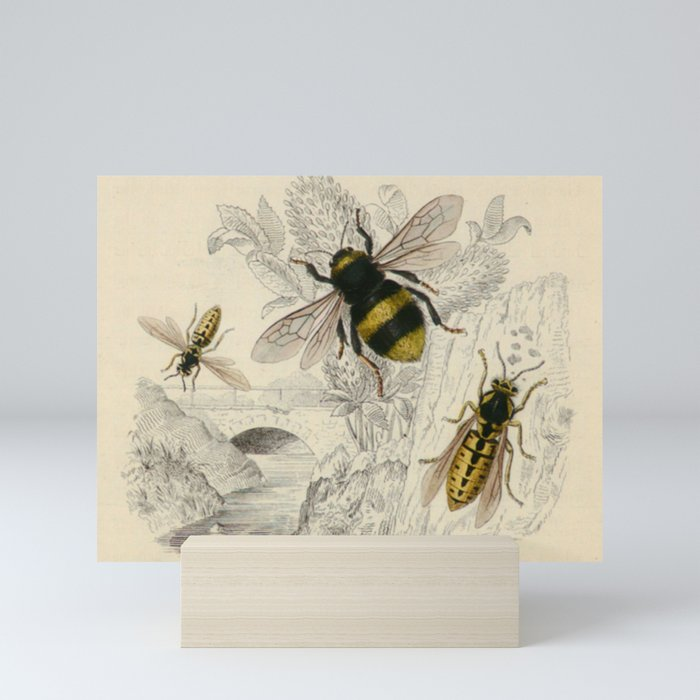 Naturalist Bee And Wasps Mini Art Print