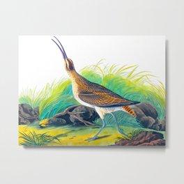 Hudsonian Curlew Metal Print