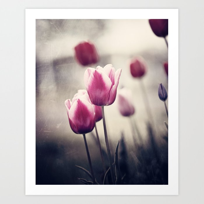 Digital Download Flower Wall Art Tulip Photography Nature Photography Macro Photography Flower Print Floral Art Spring Tulips