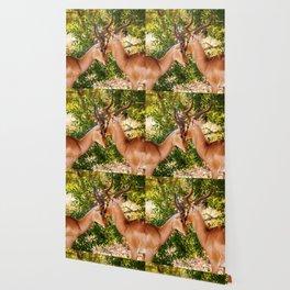 Gazelle (Color) Wallpaper
