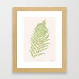 Ferns #2 Framed Art Print