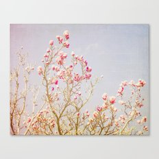 Sweet Pink Magnolias Canvas Print