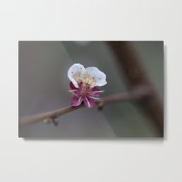 Flower PW 03 Metal Print
