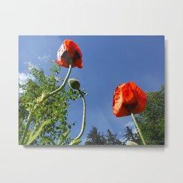 Poppy Friends Stretch to Sky in Haines, Alaska by Mandy Ramsey Metal Print