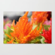 Orange Flora Canvas Print