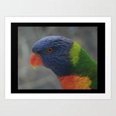 Wild Rainbow Lorikeet DPG150627a Art Print