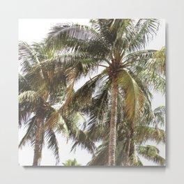 Miami Palm Trees | Landscape Photography | Coastal | Nature | Ocean  Metal Print