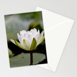 Nymphaea Alba Stationery Cards