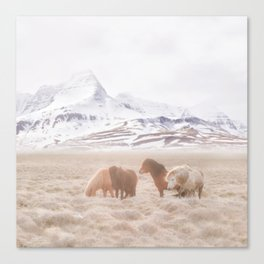 WILD AND FREE 3 - HORSES OF ICELAND Canvas Print