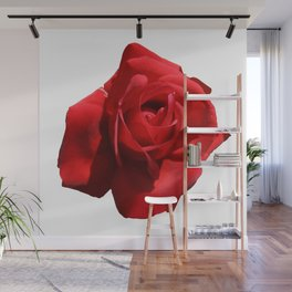 Red Rose Isolated Wall Mural