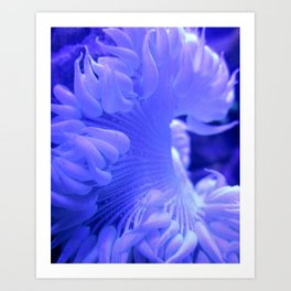 White and Blue Anemone Coral Reef Ocean Art Print