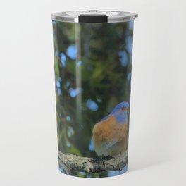 Western Bluebird Beauty by Reay of Light Photography Travel Mug