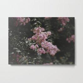 Cameo Pink Metal Print