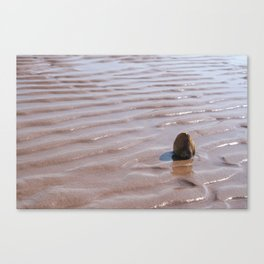 Sunbathing Clam Shell On The Water-Waved Beach, Nova Scotia, Canada Canvas Print