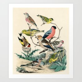 19th century bird illustration from Das Buch der Welt, 1862 Art Print