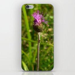 Carduus acanthoides plant, Dolomiti mountains, Italy I iPhone Skin