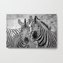 B&W Zebra Metal Print