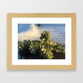 Mountain side succulents #2 Framed Art Print