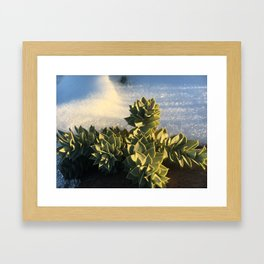 Mountain side succulents #2 Framed Art Print