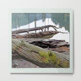FALLEN TREES ALONG MOUNTAIN LAKE TRAIL Metal Print