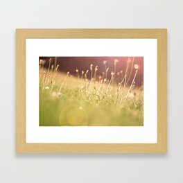 Hazy Summer Framed Art Print