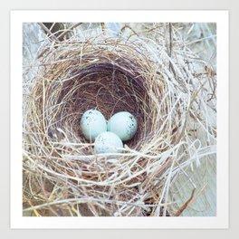 Spring Nest Art Print