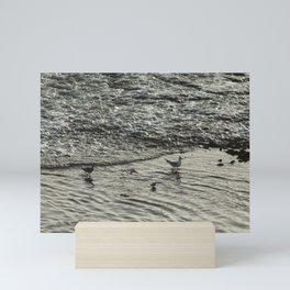 Shorebirds Wading Seashore Curlew Sandpipers Seagull Mini Art Print
