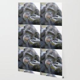 Chimp 519-2 Wallpaper