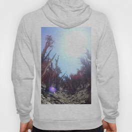 Ancient bristlecone pine forest Hoody