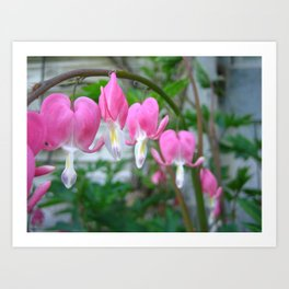 Bleeding Hearts Art Print