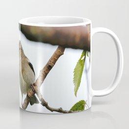 Young Chaffinch Songbird Bird Perching on a Branch - Wales, UK Coffee Mug