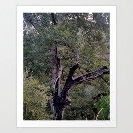 Chard Tree Art Print