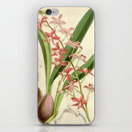 Cochlioda rosea  iPhone Skin